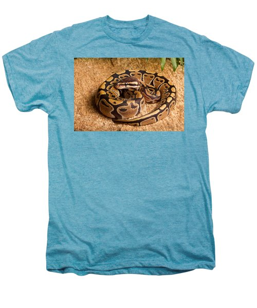 Ball Python Python Regius Coiled On Rock Men's Premium T-Shirt by David Kenny