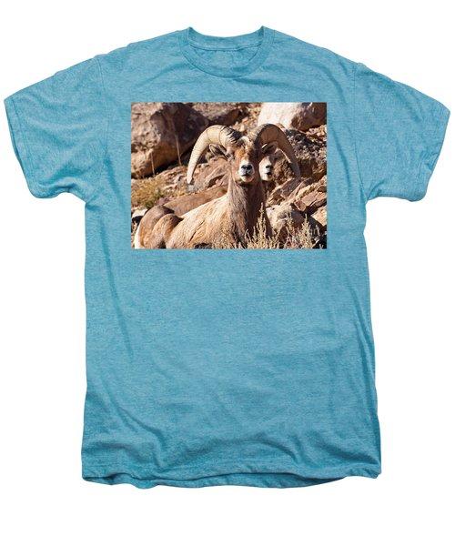 Desert Bighorn Sheep Men's Premium T-Shirt