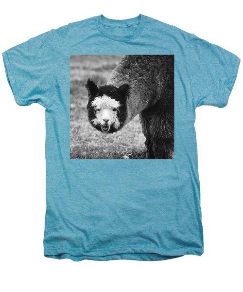 Llama Men's Premium T-Shirt by Yulia Kazansky