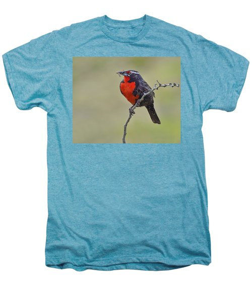 Long-tailed Meadowlark Men's Premium T-Shirt by Tony Beck