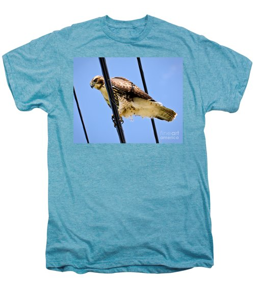 Redtailed Hawk Men's Premium T-Shirt