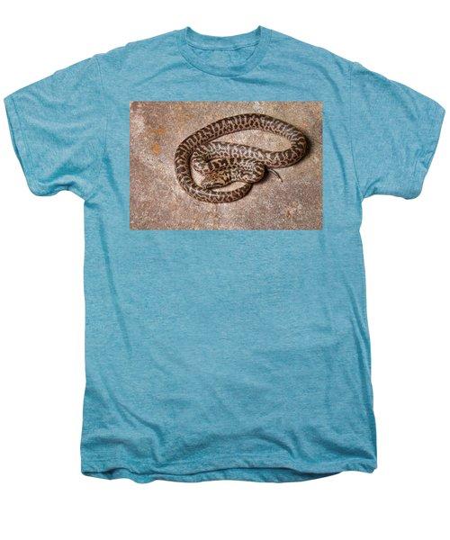 Spotted Python Antaresia Maculosa Men's Premium T-Shirt
