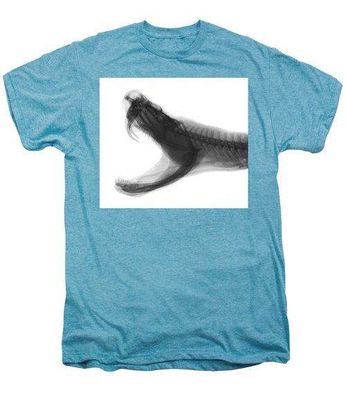 Eastern Diamondback Rattlesnake, X-ray Men's Premium T-Shirt