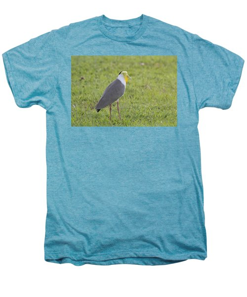 Masked Lapwing Men's Premium T-Shirt by Douglas Barnard