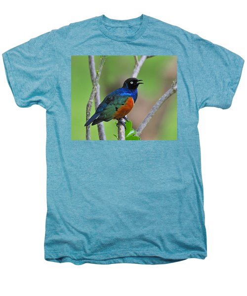 Superb Starling Men's Premium T-Shirt