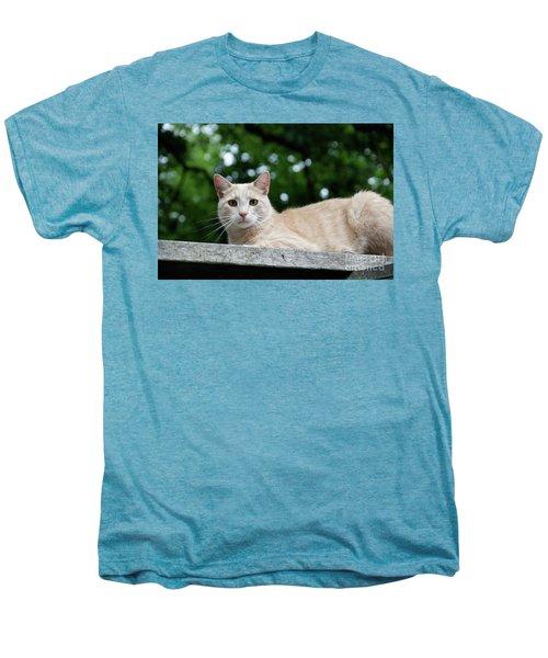 Orange Tabby Men's Premium T-Shirt