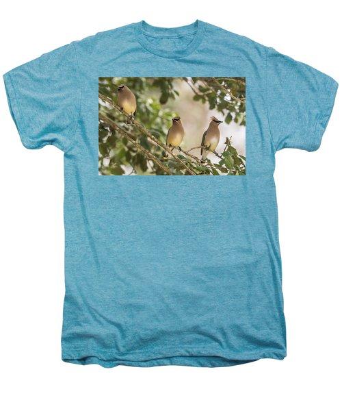 3 Cedar Waxwings  Men's Premium T-Shirt