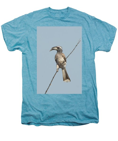 African Grey Hornbill Tockus Nasutus Men's Premium T-Shirt by Panoramic Images
