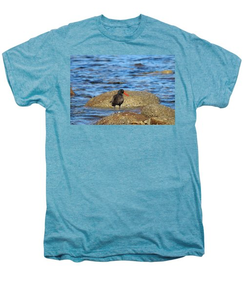 American Oystercatcher  Men's Premium T-Shirt