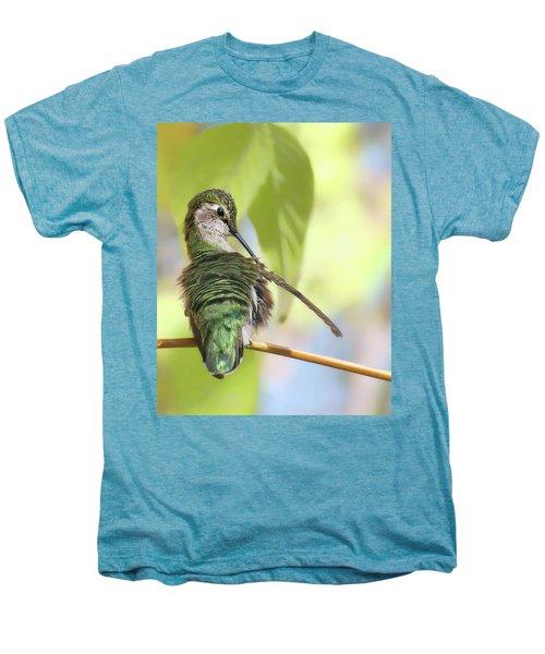 Anna's Hummingbird - Preening Men's Premium T-Shirt