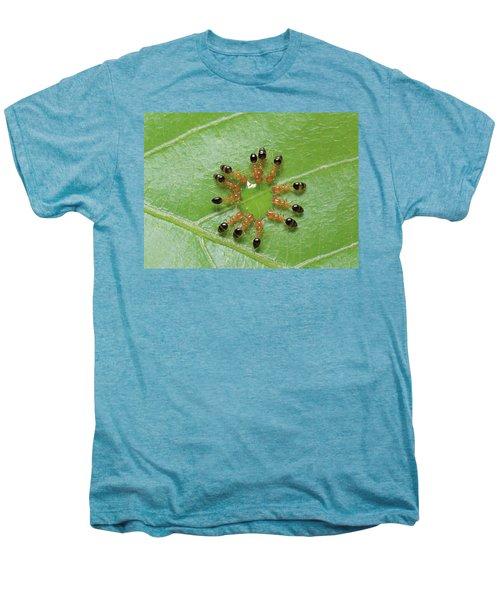 Ant Monomorium Intrudens Group Drinking Men's Premium T-Shirt by Takashi Shinkai