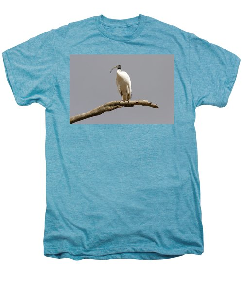 Australian White Ibis Perched Men's Premium T-Shirt