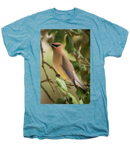 Cedar Waxwing Portrait Men's Premium T-Shirt