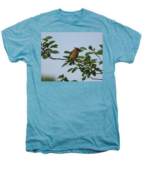 Cedar Waxwing Profile Men's Premium T-Shirt