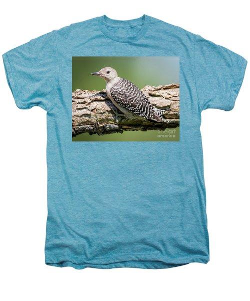 Juvenile Red-bellied Woodpecker Men's Premium T-Shirt