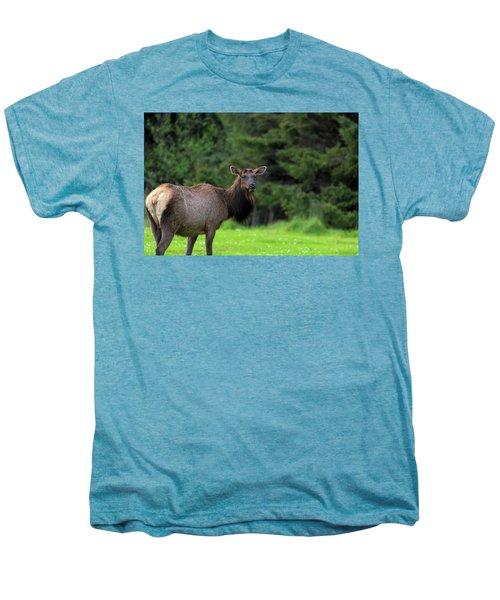 Lone Elk At Ecola State Park Men's Premium T-Shirt