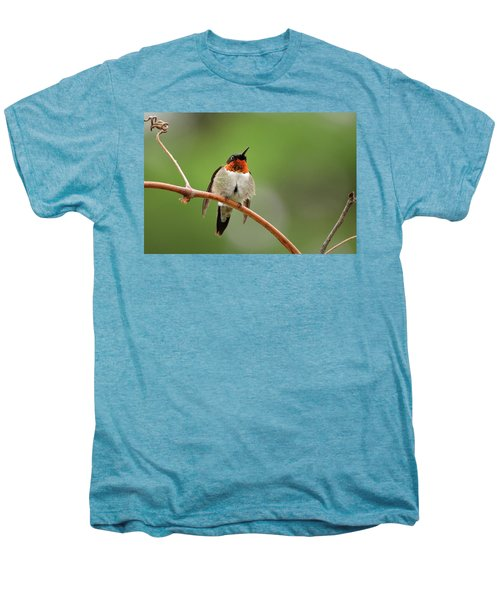 Male Ruby Throated Hummingbird Men's Premium T-Shirt