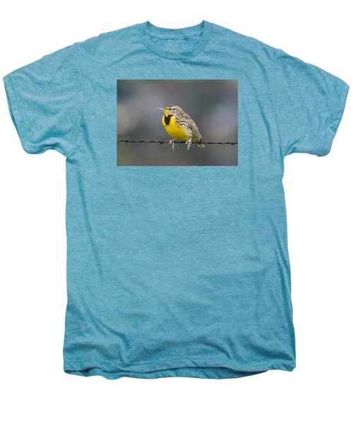 Meadowlark On Barbed Wire Men's Premium T-Shirt by Marc Crumpler