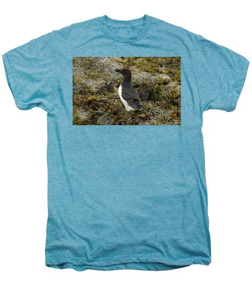 Razorbill Men's Premium T-Shirt by Judd Nathan