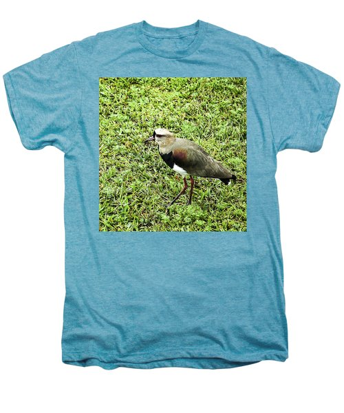 Southern Lapwing Men's Premium T-Shirt by Norman Johnson