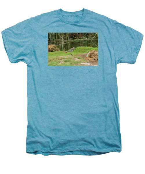 Southern Lapwing On Shore Men's Premium T-Shirt by Robert Hamm