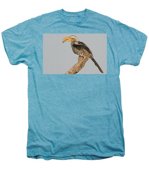 Southern Yellow-billed Hornbill Tockus Men's Premium T-Shirt by Panoramic Images