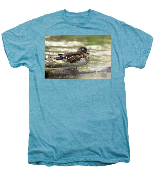 Wood Duck Hen Men's Premium T-Shirt