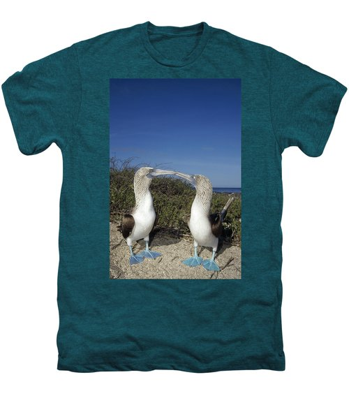Blue-footed Boobies Courting Galapagos Men's Premium T-Shirt by Tui De Roy