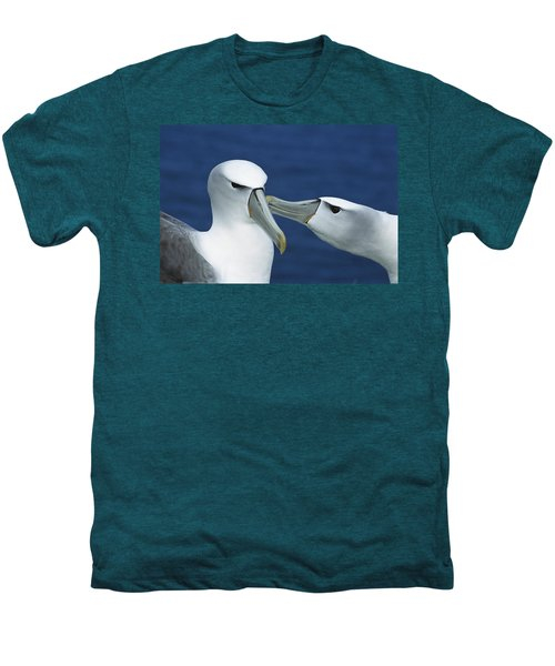 White-capped Albatrosses Courting Men's Premium T-Shirt by Tui De Roy