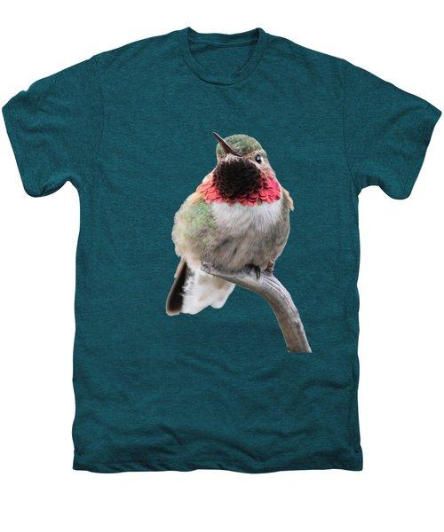 Broad-tailed Hummingbird Men's Premium T-Shirt