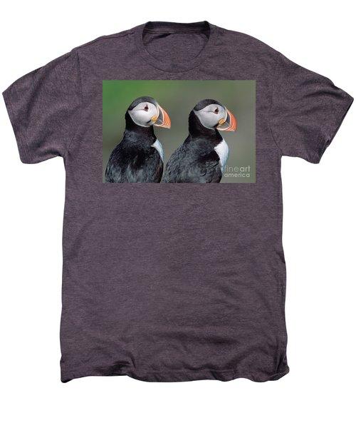Atlantic Puffins In Breeding Colors Men's Premium T-Shirt
