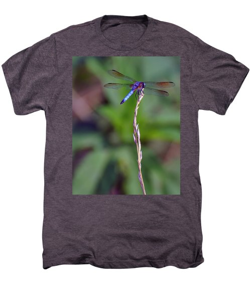 Blue Dragonfly On A Blade Of Grass  Men's Premium T-Shirt