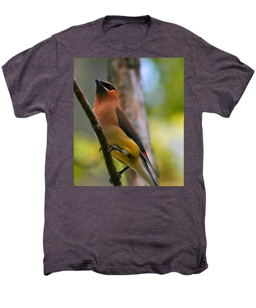 Cedar Wax Wing Men's Premium T-Shirt by Roger Becker
