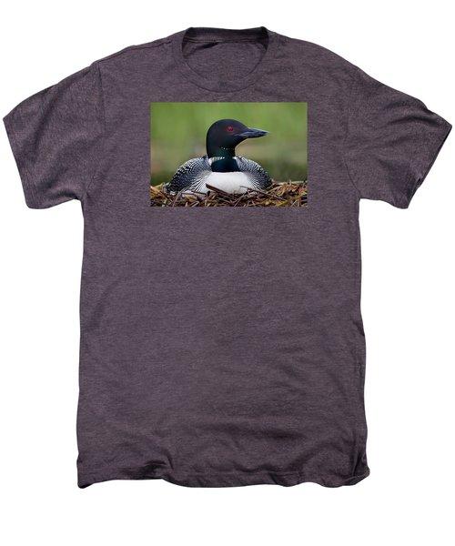 Common Loon On Nest British Columbia Men's Premium T-Shirt by Connor Stefanison