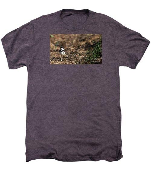 Killdeer Chick Men's Premium T-Shirt by Skip Willits