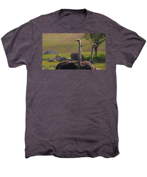 Ostriches Men's Premium T-Shirt by Dan Sproul