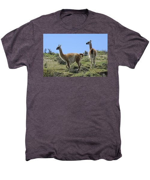 Patagonian Guanacos Men's Premium T-Shirt by Michele Burgess