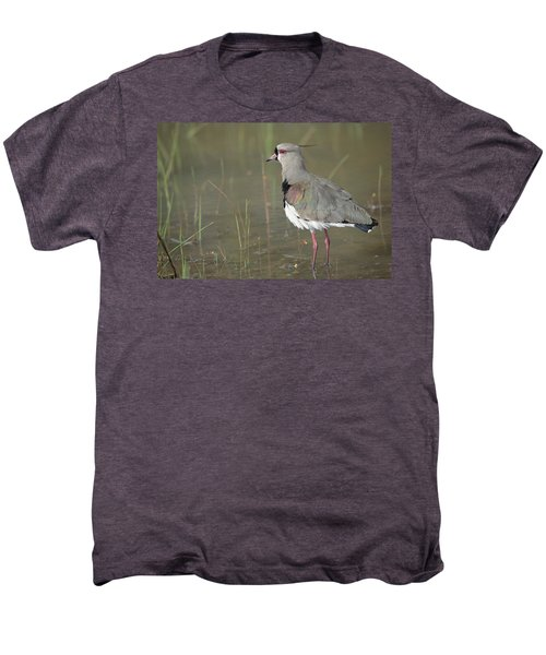 Southern Lapwing In Marshland Pantanal Men's Premium T-Shirt