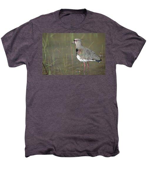Southern Lapwing In Marshland Pantanal Men's Premium T-Shirt by Tui De Roy