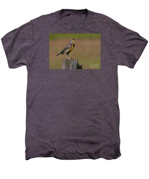 Western Meadowlark.. Men's Premium T-Shirt by Nina Stavlund