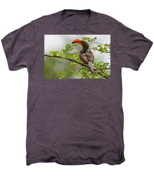 Yellow-billed Hornbill Men's Premium T-Shirt by Bruce J Robinson