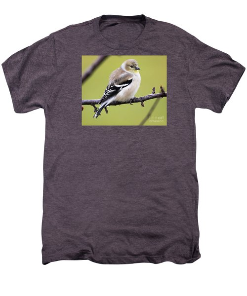American Goldfinch Men's Premium T-Shirt by Ricky L Jones