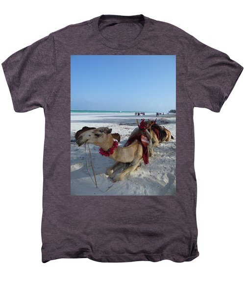Camel On Beach Kenya Wedding Men's Premium T-Shirt