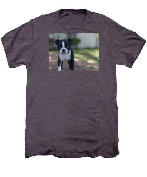 Harley As A Puppy Men's Premium T-Shirt by Lora Lee Chapman