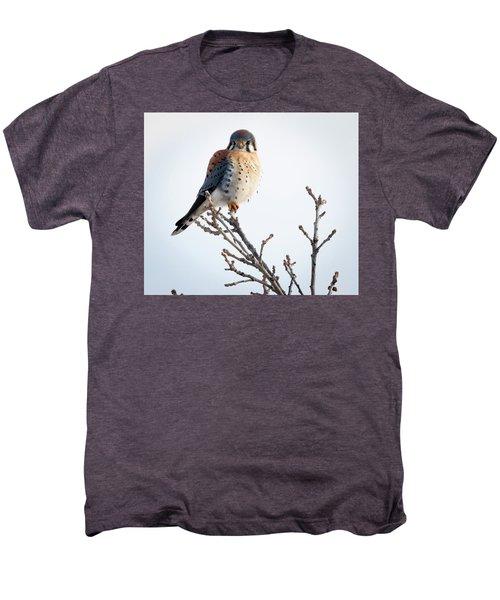 American Kestrel At Bender Men's Premium T-Shirt