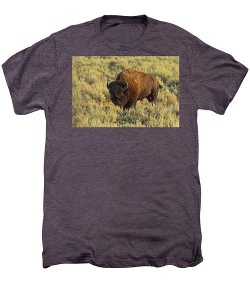 Bison Men's Premium T-Shirt