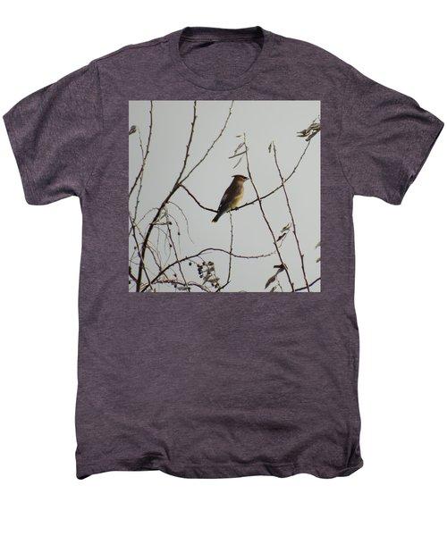 Cedar Wax Wing In Tree Men's Premium T-Shirt