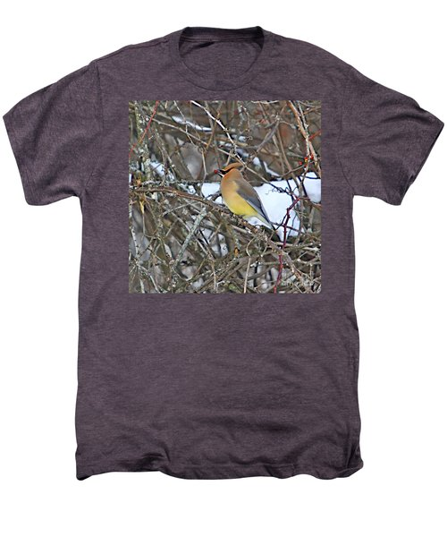Cedar Wax Wing Men's Premium T-Shirt by Robert Pearson