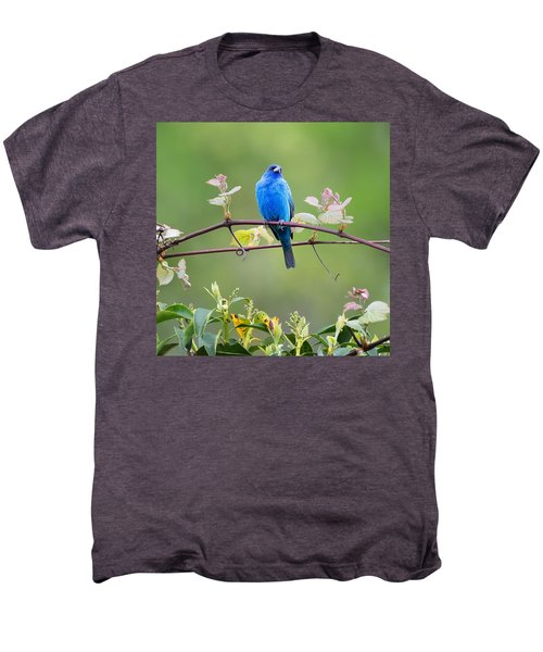 Indigo Bunting Perched Square Men's Premium T-Shirt by Bill Wakeley
