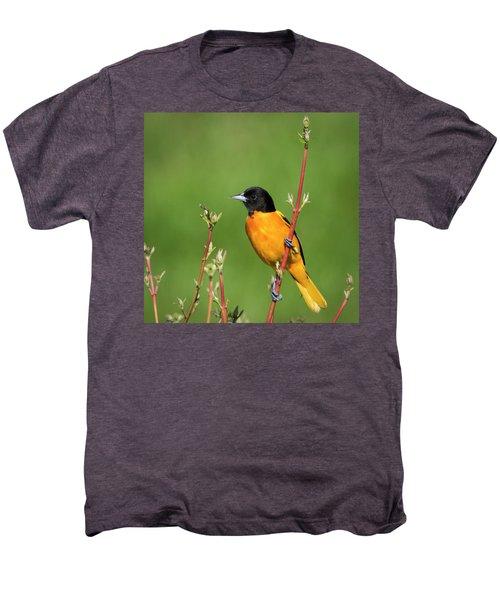 Male Baltimore Oriole Posing Men's Premium T-Shirt